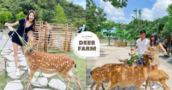 【手機交友APP推薦】【精選】全台6處鹿園景點在這裡,超萌台版小奈良,小鹿斑比我來啦!