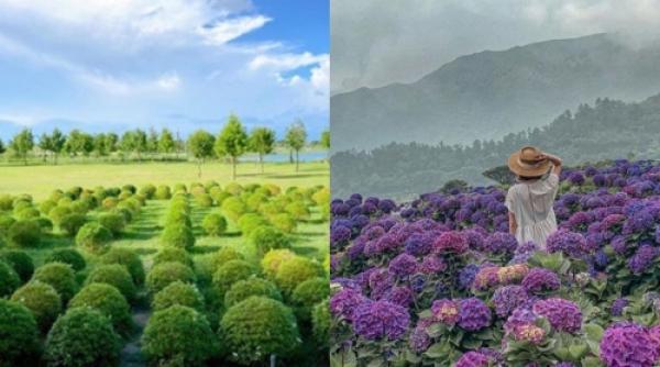 【手機交友APP推薦】這是精靈的家嗎?絕美秘境「抹茶波波草、山谷繡球花」全都在台灣,胖糰子襯著藍天白雲美到像幅畫!