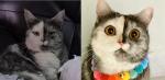 【手機交友APP推薦】貓界OREO就是牠!超古錐雙面貓《Cat》帶著罕見毛色萌爆你的內心!